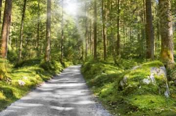 Profitez une course d'orientation gratuite dans la forêt à Casteljaloux